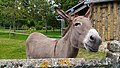 Donkey in Beaufour Druval, Augustin, the 10th.jpg
