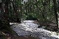 Dove Lake Circuit Walking Track, Cradle Mountain - Lake St Clair National Park 64.jpg