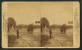 Dr. Bary's residence and orange grove, Enterprise, Florida, from Robert N. Dennis collection of stereoscopic views.png