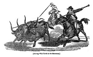 "Maremmana - ""Driving wild cattle in the Maremma"", woodcut from the Penny Magazine, 1832"