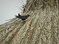 Dry Palm Leaf.jpg
