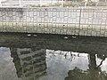 Ducks in Hamaogawa River 20200105-2.jpg