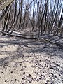 Dunatelep floodplain, muddy, 2021 Nagytétény.jpg