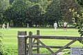 Dunmow CC v Brockley CC at Great Dunmow, Essex, England 41.jpg