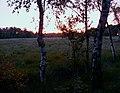 Duvenstedter Brook Sonnenuntergang.jpg