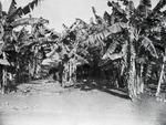 ETH-BIB-Palmenhain-Kilimanjaroflug 1929-30-LBS MH02-07-0591.tif