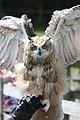Eagle owl - Flickr - exfordy.jpg