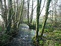 East Looe River - downstream - geograph.org.uk - 750063.jpg