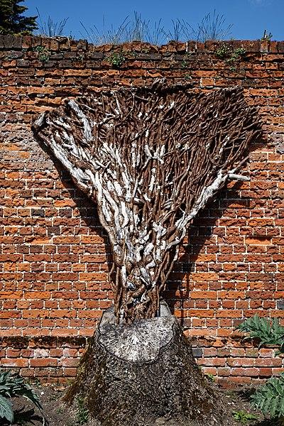 File:Easton Lodge Gardens walled garden tree stump, Little Easton, Essex, England.jpg