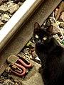 El gato de la estación de Bosques.jpg