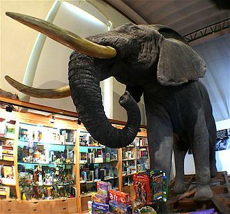 Museo Nacional de Ciencias Naturales - Image: Elefante disecado MCNM