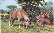 Elenantilope-painting