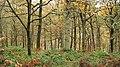 Elibank Forest - geograph.org.uk - 1569416.jpg