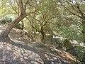 Embalse-de-Bornos-P1420733.jpg