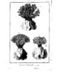 Encyclopedie volume 5-145.png