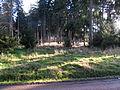 ErbacherKopfNWRheinhöhenweg2.JPG