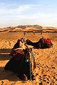 Erg Chebbi Dunes Camel LL.JPG
