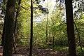 Erlenbruch Langwiesenholz 12.jpg