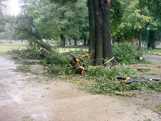 Hurricane Ernesto (2006) - Fallen tree branch in Richmond, Virginia, caused by winds from Ernesto