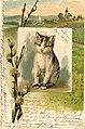 Erwin Spindler Ansichtskarte 1 Katze.jpg