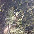 Escada da natureza.jpg