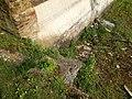 Escalier du Bassin de La Sathonette.jpeg