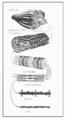 Estructura Muscular.png