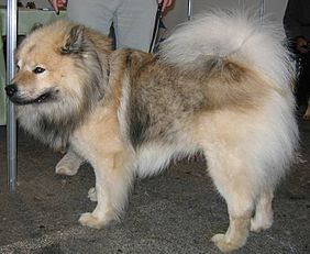 Best Breed Of Dog For Family With Allergies