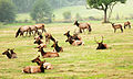 Ever Herd Of Elk? (5055474561).jpg