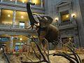 Fénykövi Elephant.jpg
