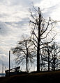 FEMA - 40035 - Utility workers and broken trees in Kentucky.jpg
