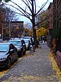 Fall in Harlem.jpg