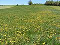 Feldkirchen bei Mattighofen - Vormoos - 2016 04 30 - Feld-3.jpg