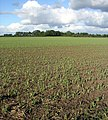 Fields near Marcham - geograph.org.uk - 60967.jpg