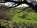 Fields near Waddon - geograph.org.uk - 749332.jpg