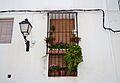 Finestra amb plantes, Xàbia.JPG