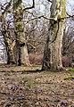 First signs of spring 2013 - panoramio.jpg