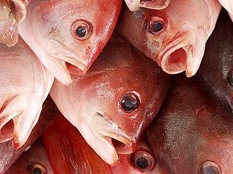 Ensenada, Baja California - Fresh fish at Ensenada´s fish market, the Mercado Negro.