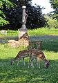 Flickr - Duncan~ - Deer at Bushy Park.jpg
