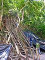 Flickr - archer10 (Dennis) - Guatemala-1548.jpg