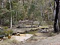 Flinders Range, Wilpena Pound Walking Trail - panoramio.jpg