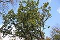 Flora della Sardegna 003 (04).jpg