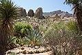 Flora of Pinal County, AZ, USA (14154063022).jpg