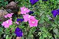 Flower 85 (8234455578).jpg