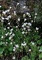 Flower March 2010-1.jpg