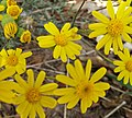 Flowers-Saba-Kerman.jpg