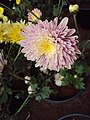 Flowers - Uncategorised Garden plants 45.JPG