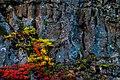 Flowers On The Wall (125065397).jpeg