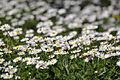Flowers field!.JPG