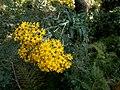 Flowers on Miran Jani Track - panoramio.jpg
